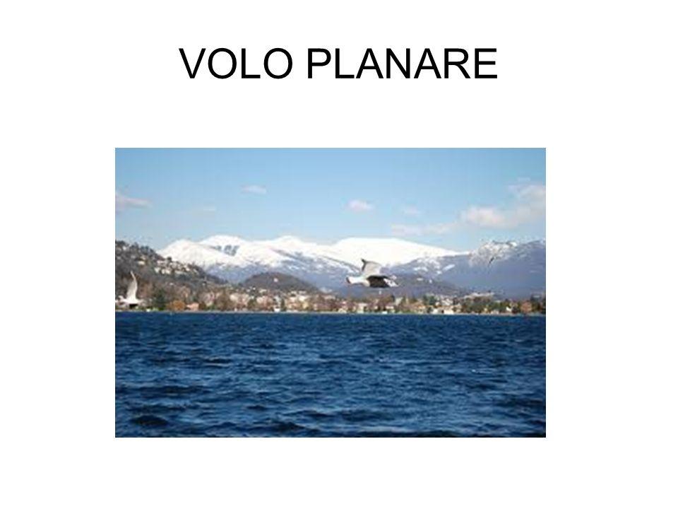 VOLO PLANARE