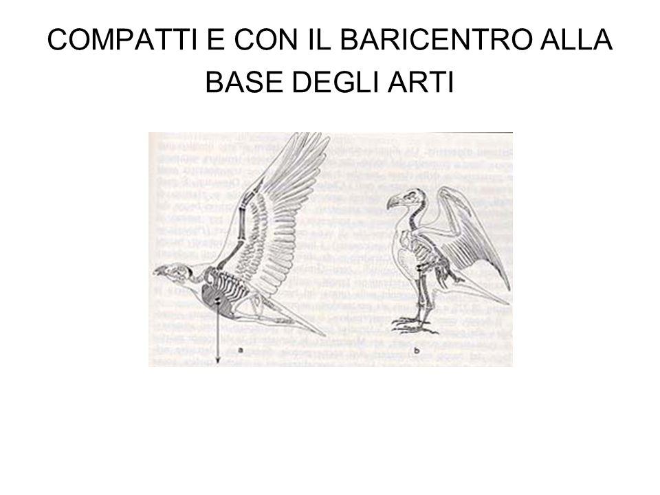 COMPATTI E CON IL BARICENTRO ALLA BASE DEGLI ARTI