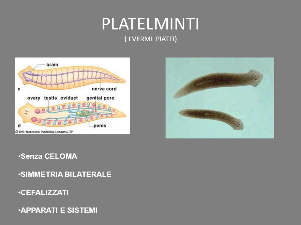 PLATELMINTI ( I VERMI PIATTI)