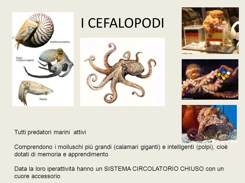I CEFALOPODI Tutti predatori marini attivi