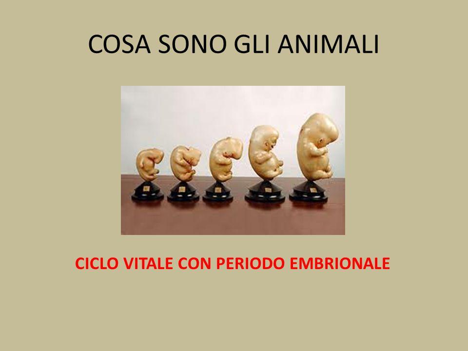 COSA SONO GLI ANIMALI CICLO VITALE CON PERIODO EMBRIONALE