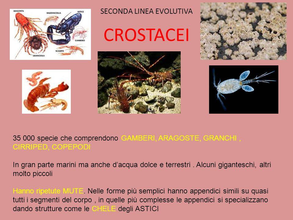 SECONDA LINEA EVOLUTIVA CROSTACEI