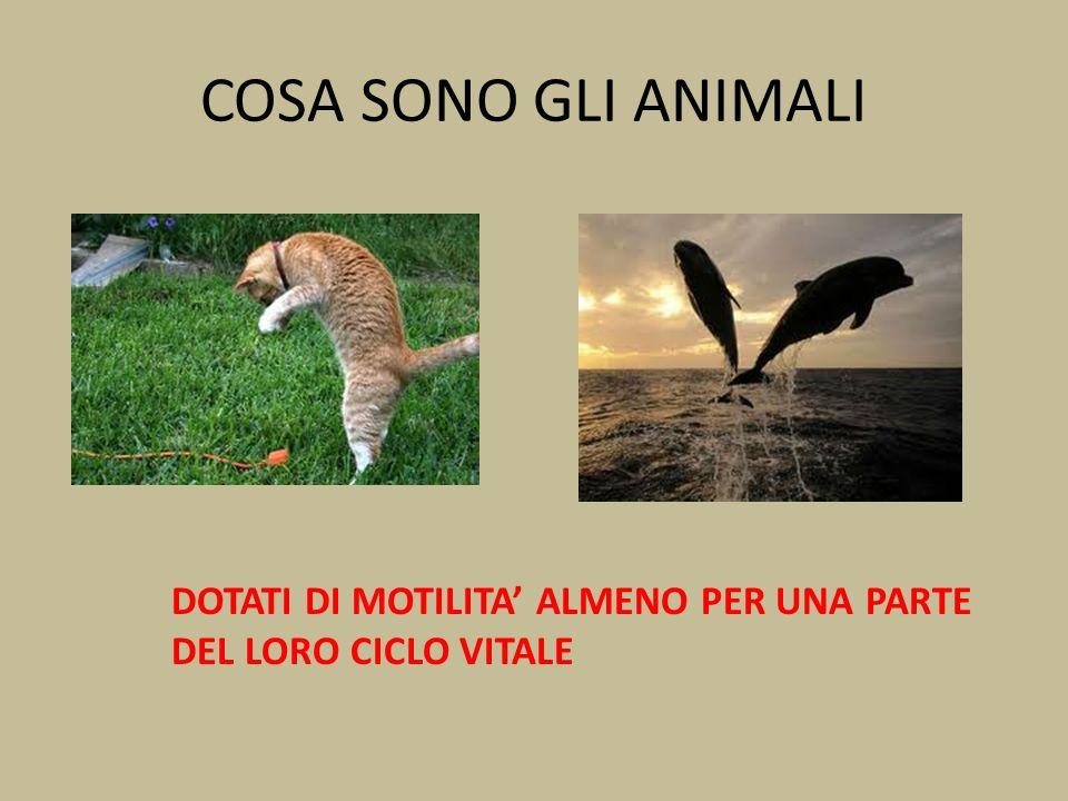 COSA SONO GLI ANIMALI DOTATI DI MOTILITA' ALMENO PER UNA PARTE DEL LORO CICLO VITALE