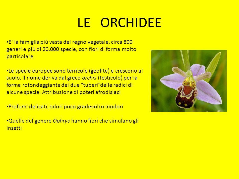 LE ORCHIDEE E' la famiglia più vasta del regno vegetale, circa 800 generi e più di 20.000 specie, con fiori di forma molto particolare.