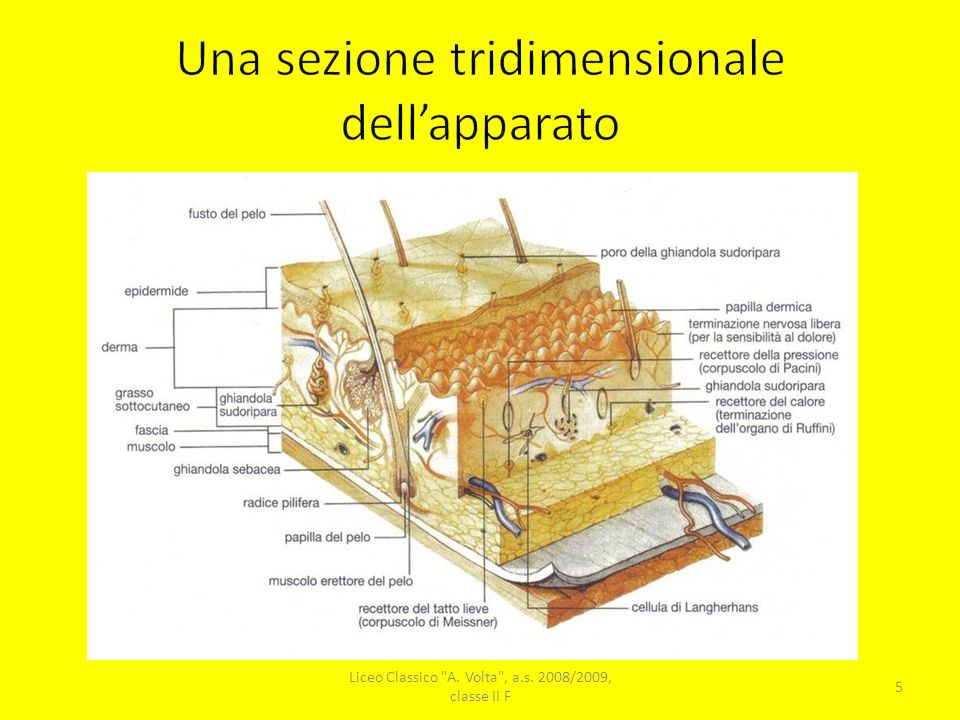 Una sezione tridimensionale dell'apparato