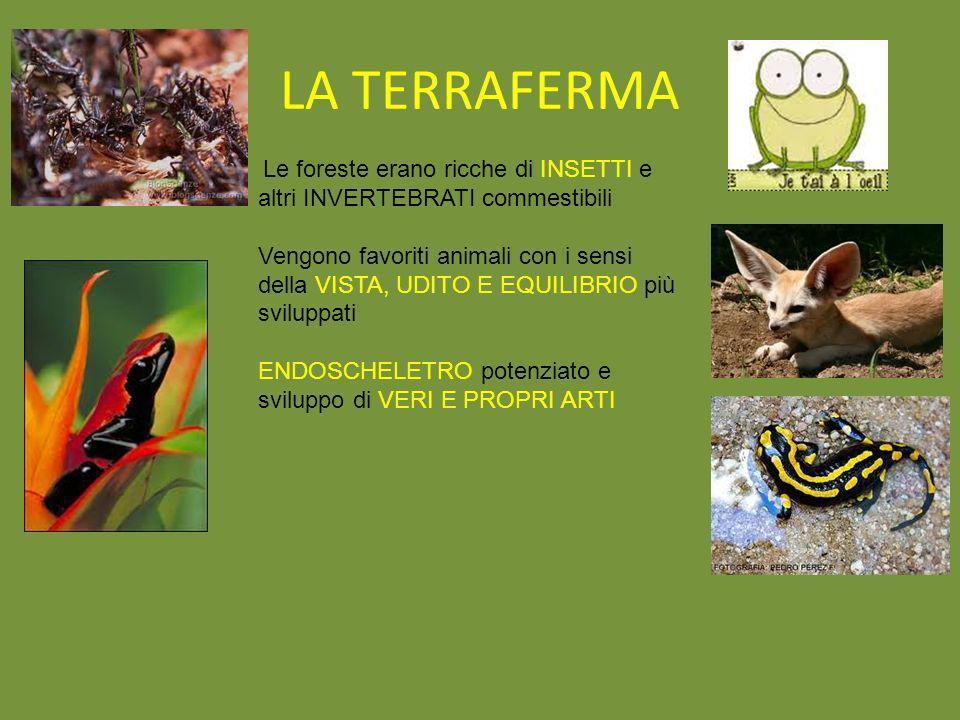 LA TERRAFERMA Le foreste erano ricche di INSETTI e altri INVERTEBRATI commestibili.