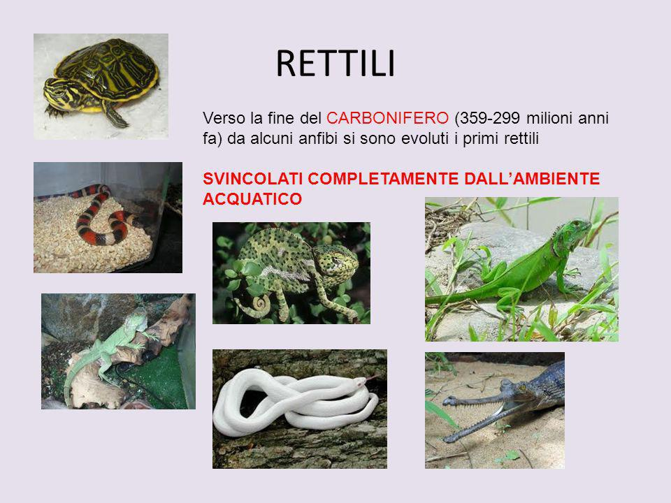 RETTILI Verso la fine del CARBONIFERO (359-299 milioni anni fa) da alcuni anfibi si sono evoluti i primi rettili.