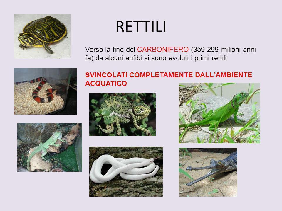 RETTILIVerso la fine del CARBONIFERO (359-299 milioni anni fa) da alcuni anfibi si sono evoluti i primi rettili.