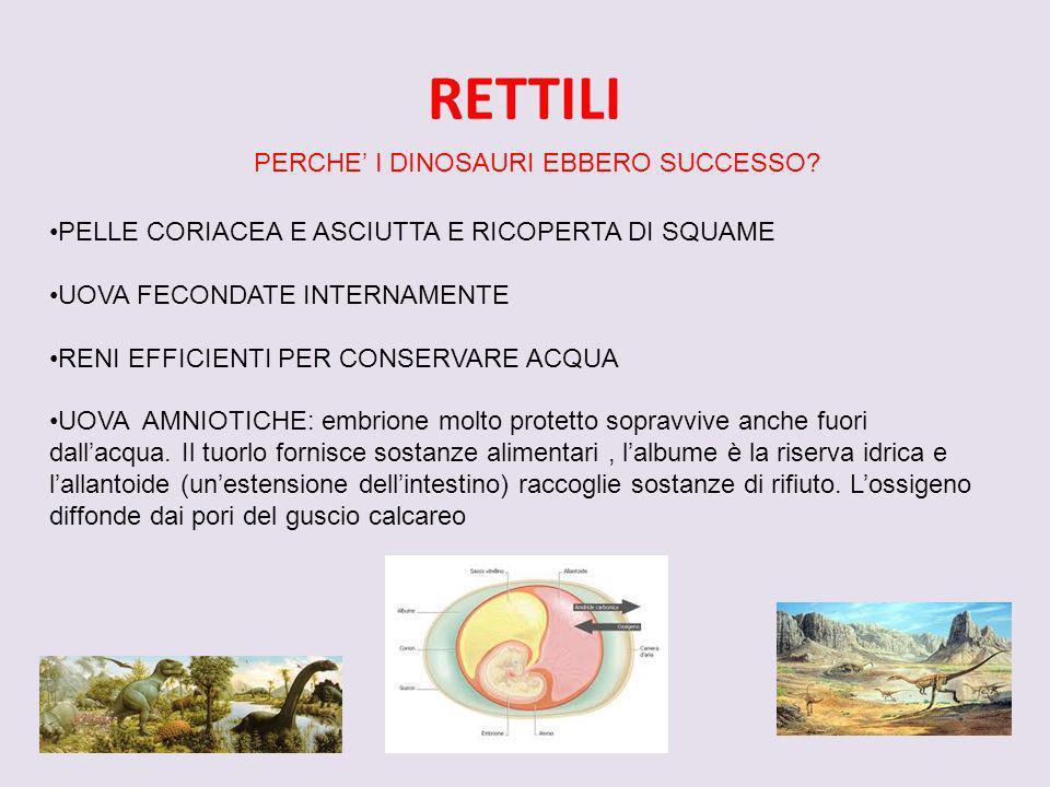 RETTILI PERCHE' I DINOSAURI EBBERO SUCCESSO
