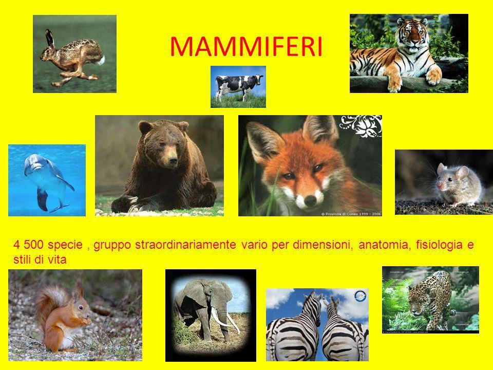 MAMMIFERI 4 500 specie , gruppo straordinariamente vario per dimensioni, anatomia, fisiologia e stili di vita.