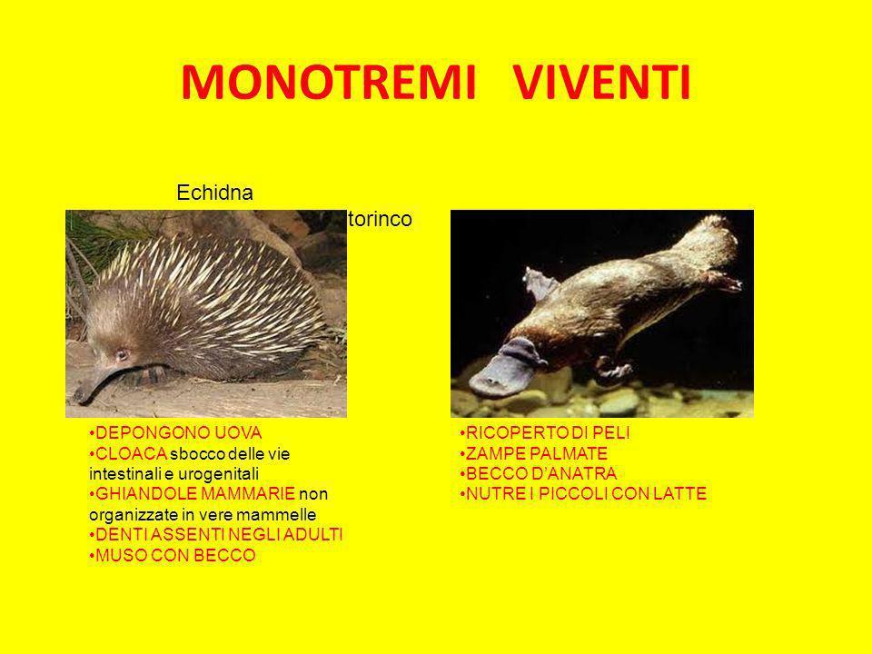 MONOTREMI VIVENTI Echidna Ornitorinco DEPONGONO UOVA