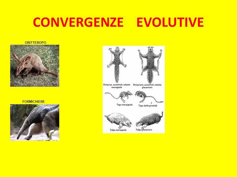 CONVERGENZE EVOLUTIVE