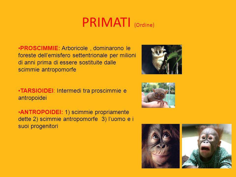 PRIMATI (Ordine)