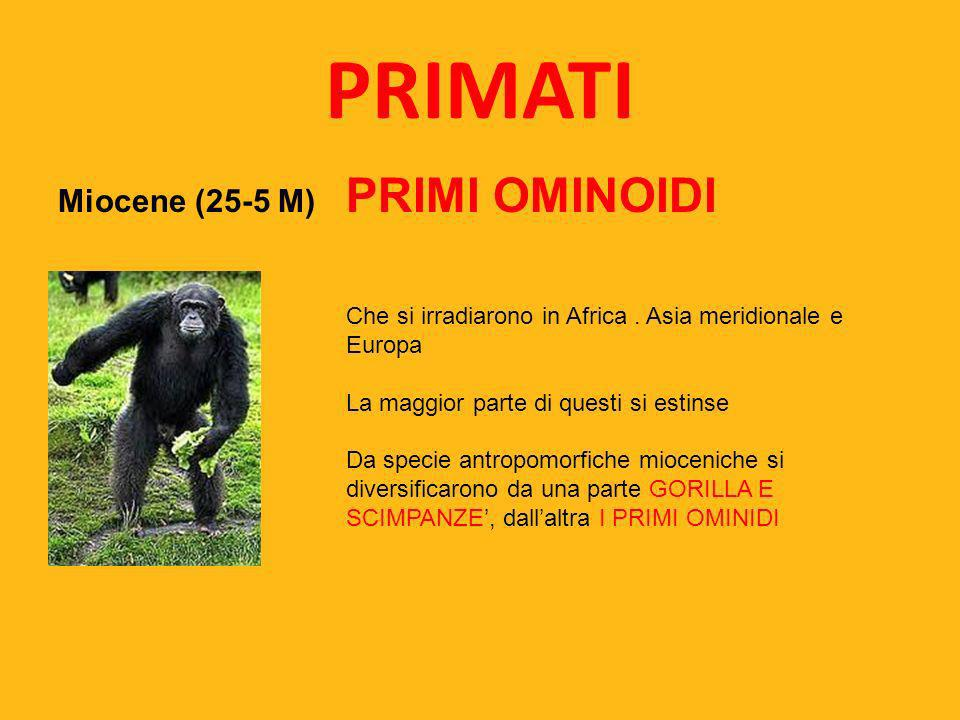 PRIMATI Miocene (25-5 M) PRIMI OMINOIDI