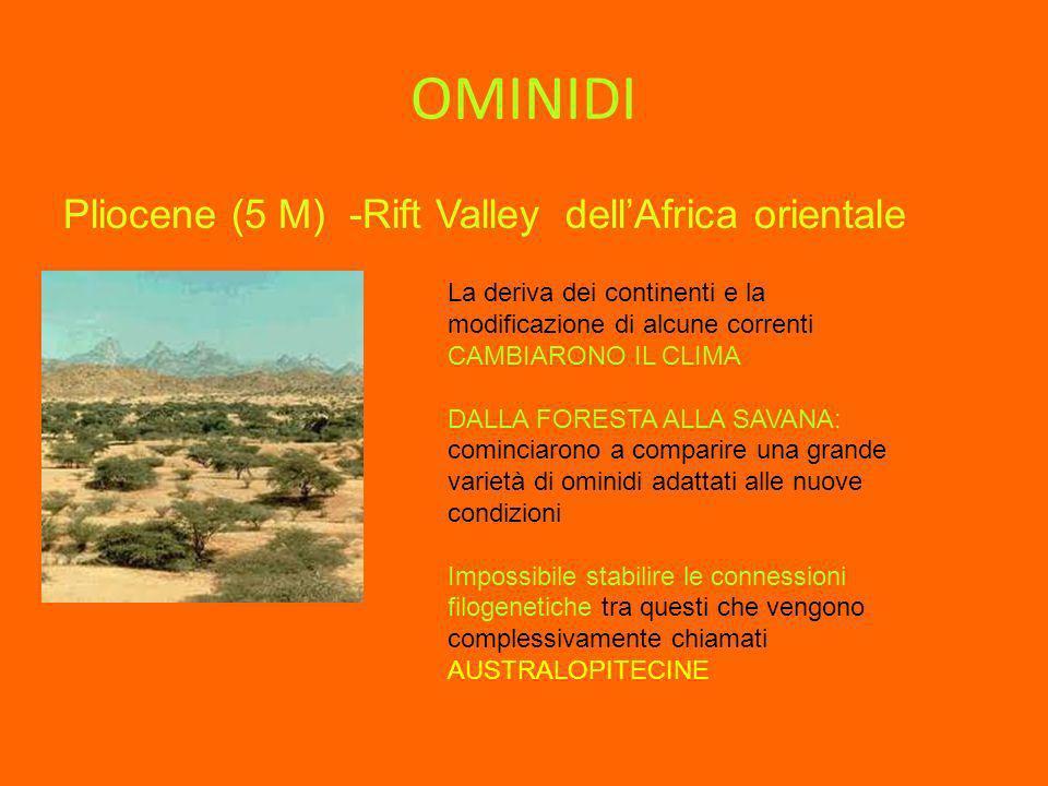 OMINIDI Pliocene (5 M) -Rift Valley dell'Africa orientale