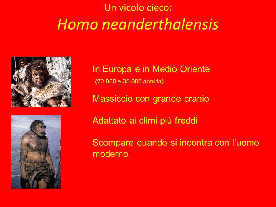 Un vicolo cieco: Homo neanderthalensis