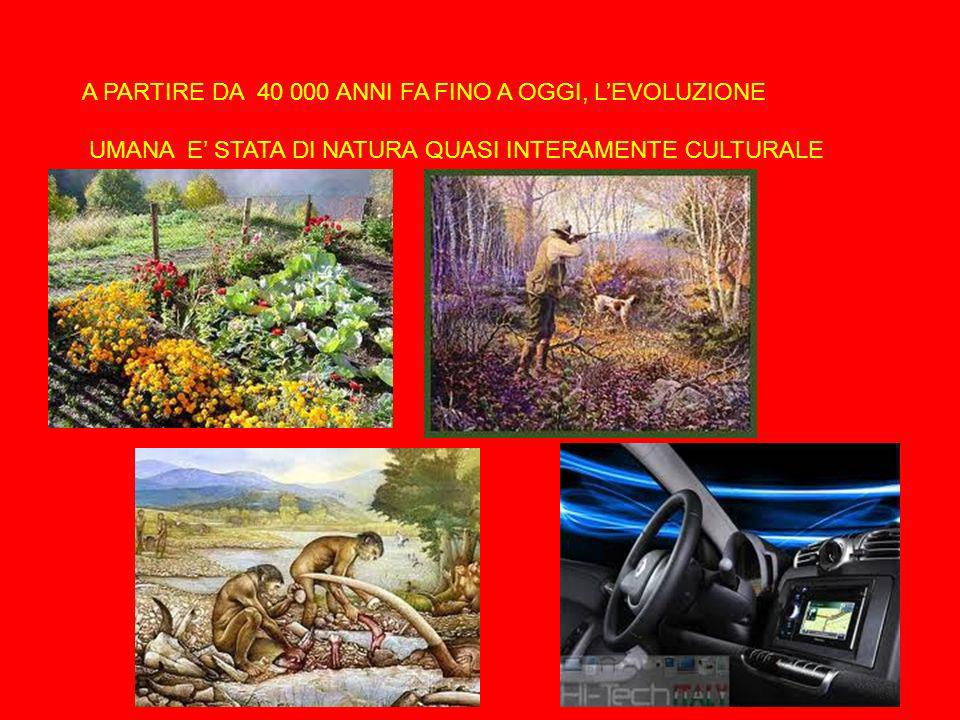 A PARTIRE DA 40 000 ANNI FA FINO A OGGI, L'EVOLUZIONE