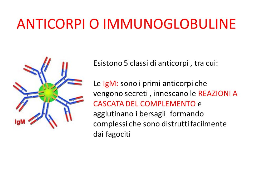 ANTICORPI O IMMUNOGLOBULINE