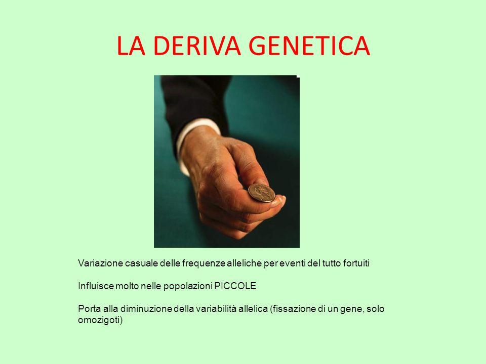 LA DERIVA GENETICA Variazione casuale delle frequenze alleliche per eventi del tutto fortuiti. Influisce molto nelle popolazioni PICCOLE.