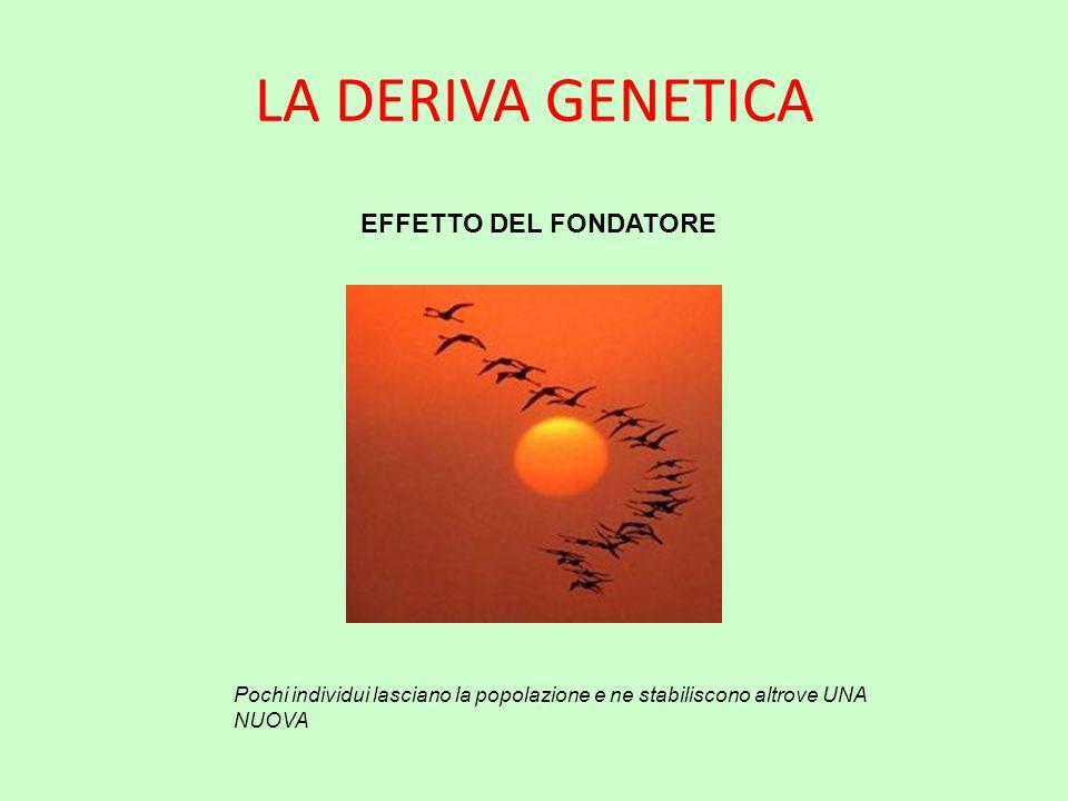 LA DERIVA GENETICA EFFETTO DEL FONDATORE