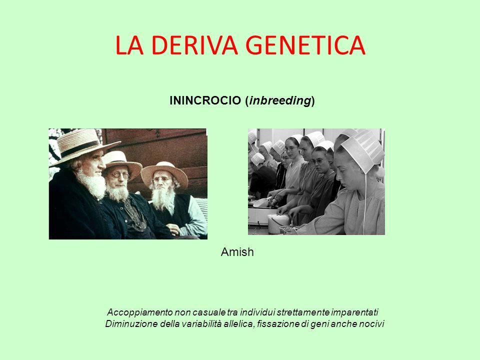 ININCROCIO (inbreeding)