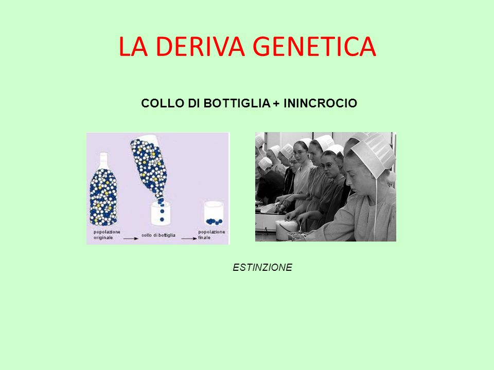 COLLO DI BOTTIGLIA + ININCROCIO