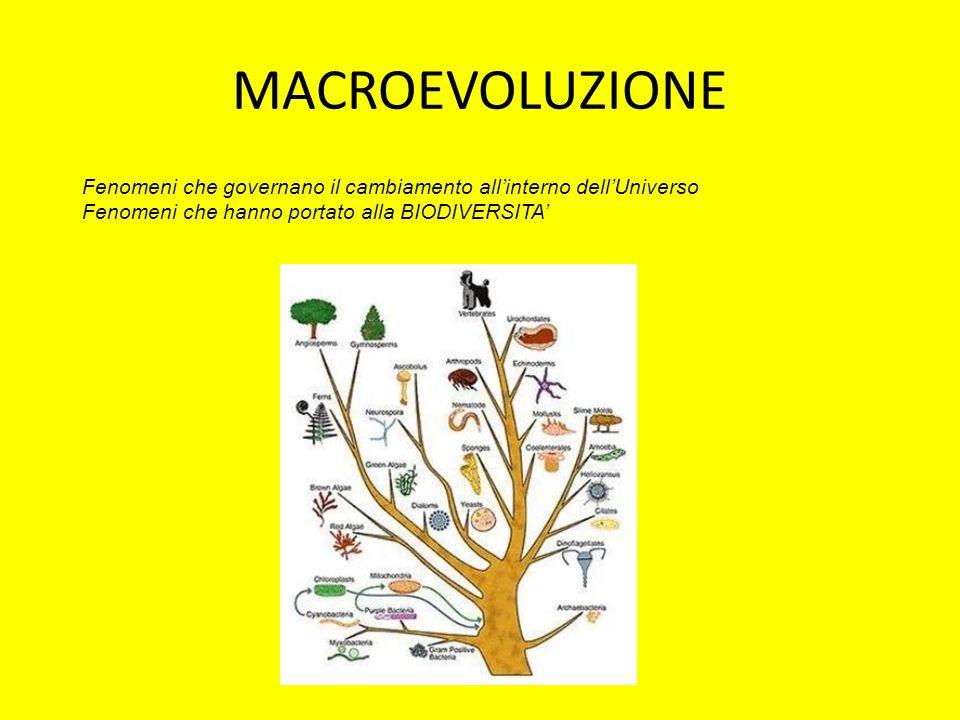 MACROEVOLUZIONE Fenomeni che governano il cambiamento all'interno dell'Universo.