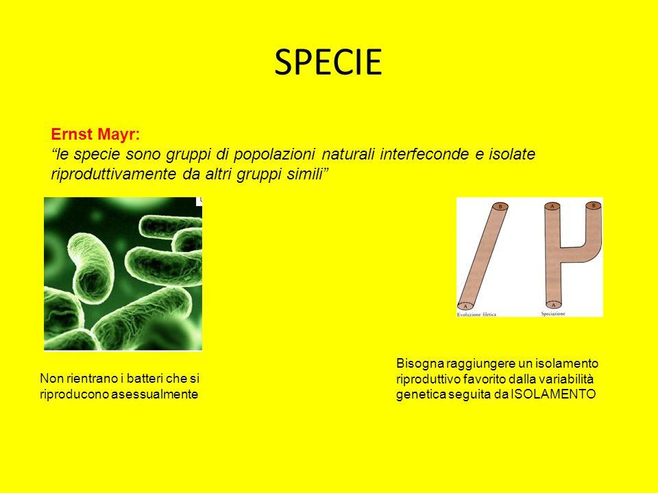 SPECIE Ernst Mayr: le specie sono gruppi di popolazioni naturali interfeconde e isolate riproduttivamente da altri gruppi simili
