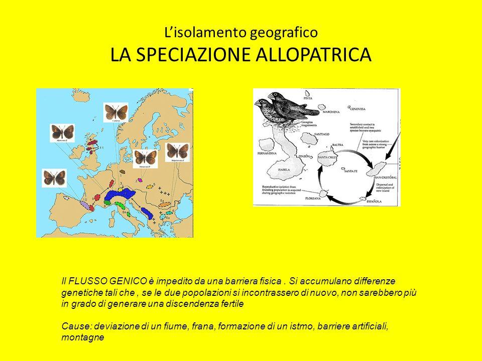 L'isolamento geografico LA SPECIAZIONE ALLOPATRICA