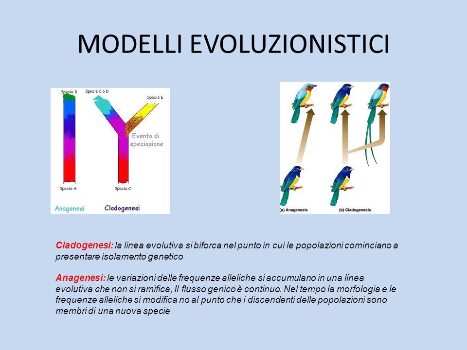 MODELLI EVOLUZIONISTICI
