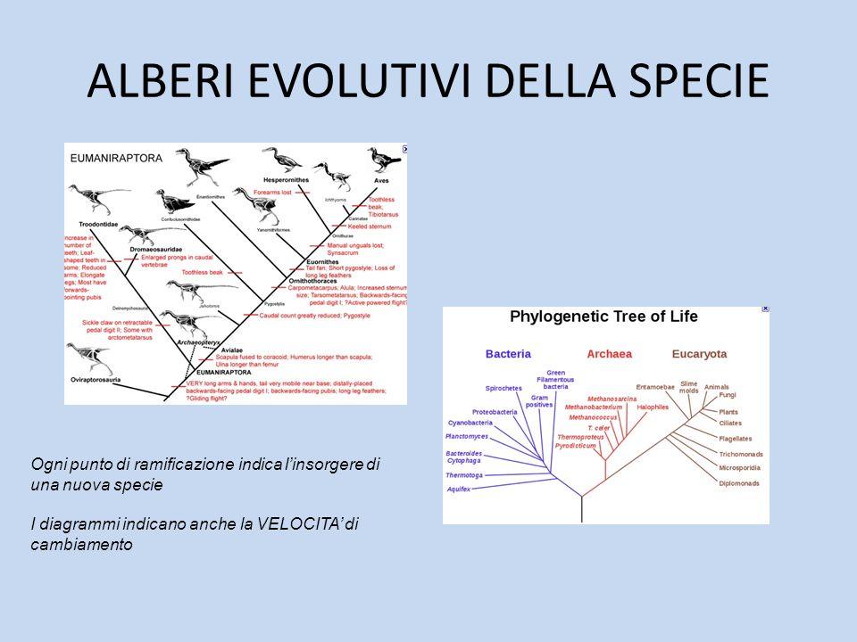 ALBERI EVOLUTIVI DELLA SPECIE