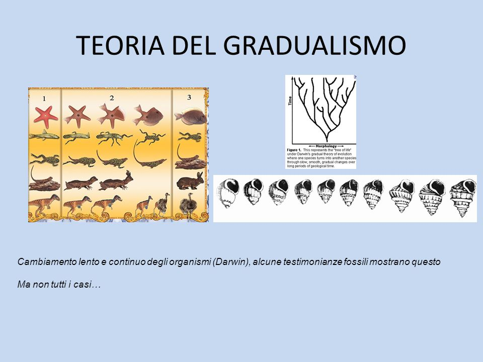 TEORIA DEL GRADUALISMO