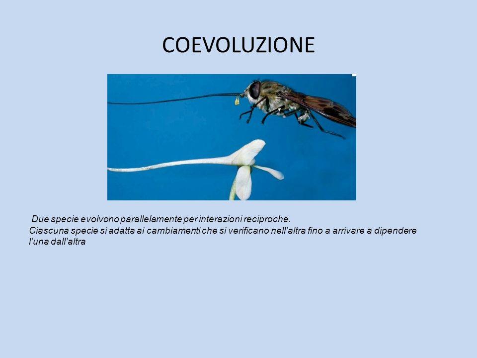 COEVOLUZIONE Due specie evolvono parallelamente per interazioni reciproche.