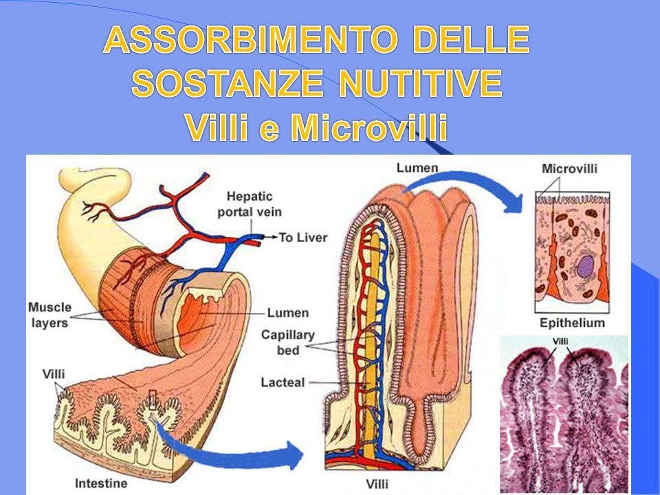 ASSORBIMENTO DELLE SOSTANZE NUTITIVE Villi e Microvilli