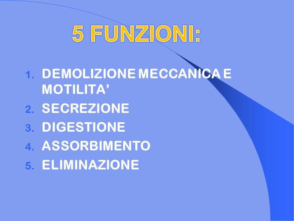 5 FUNZIONI: DEMOLIZIONE MECCANICA E MOTILITA' SECREZIONE DIGESTIONE