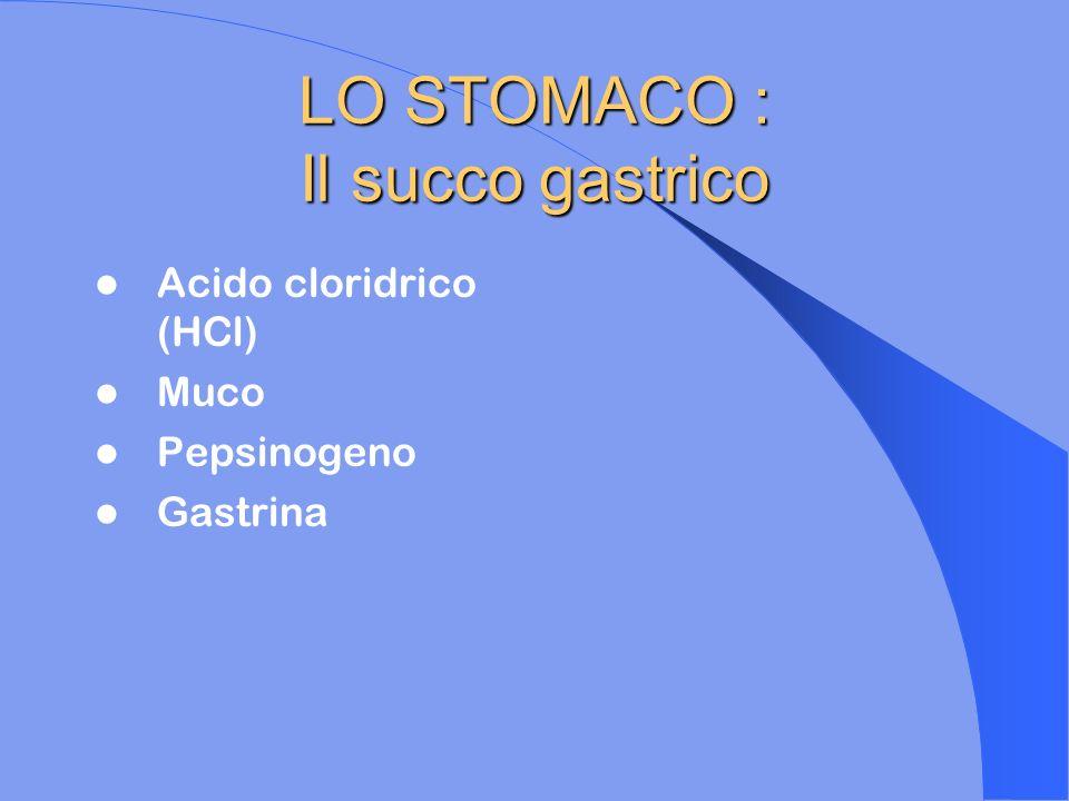 LO STOMACO : Il succo gastrico