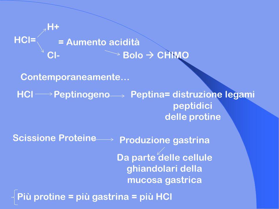 Peptina= distruzione legami peptidici delle protine