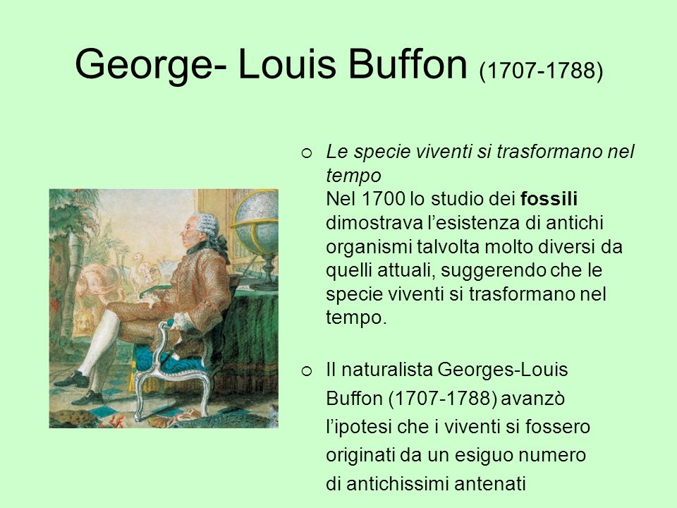 George- Louis Buffon (1707-1788)