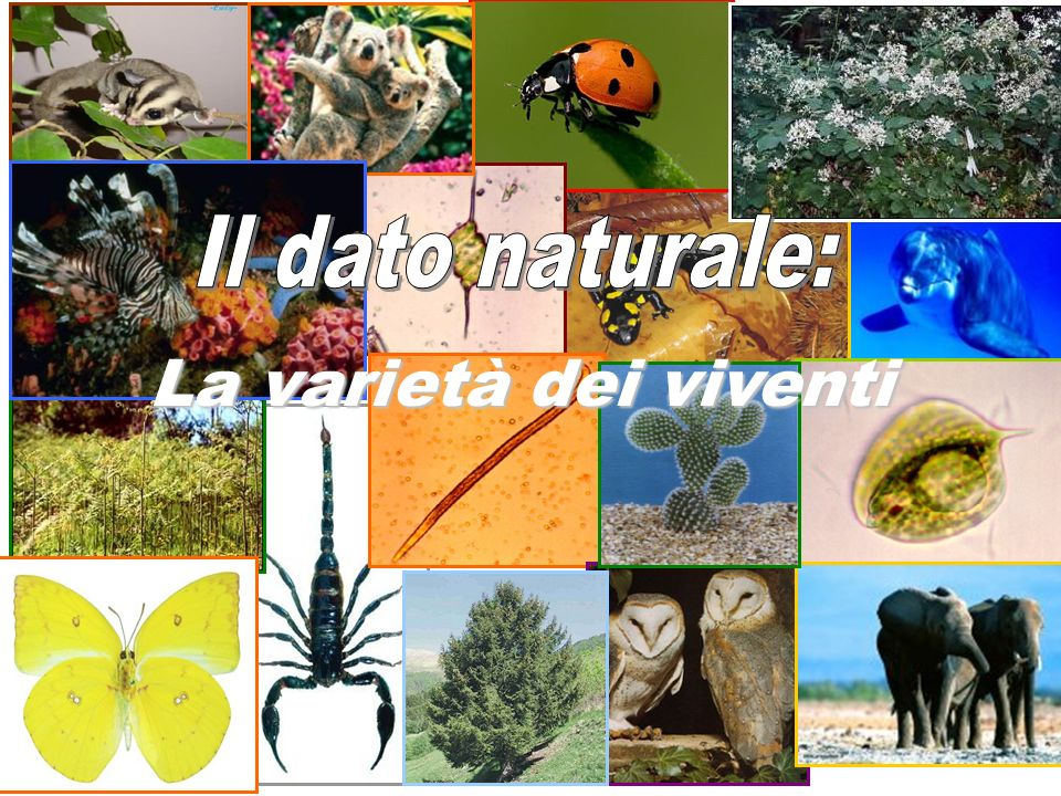 Il dato naturale: La varietà dei viventi
