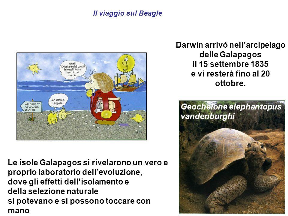 Darwin arrivò nell'arcipelago delle Galapagos il 15 settembre 1835