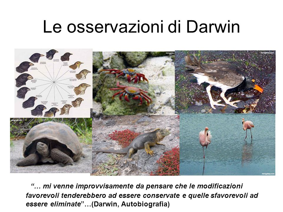 Le osservazioni di Darwin