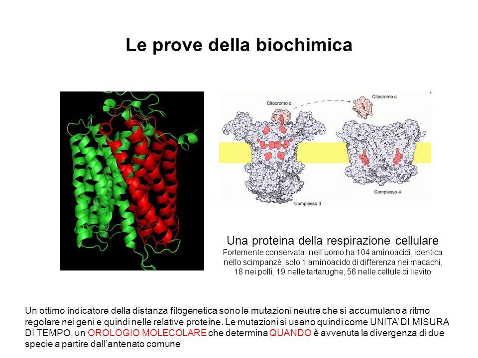 Le prove della biochimica