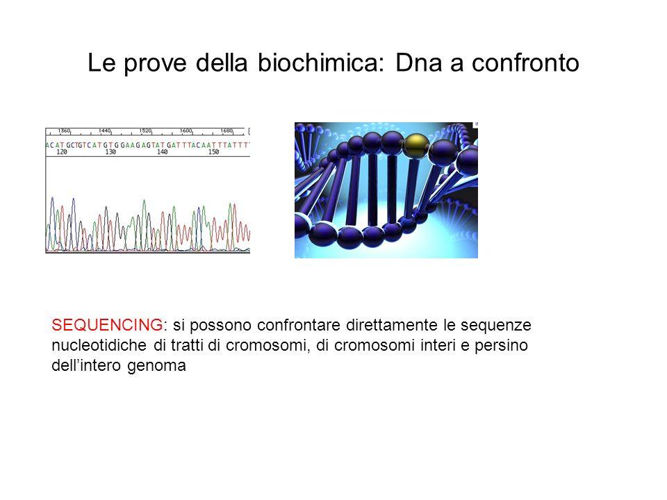 Le prove della biochimica: Dna a confronto