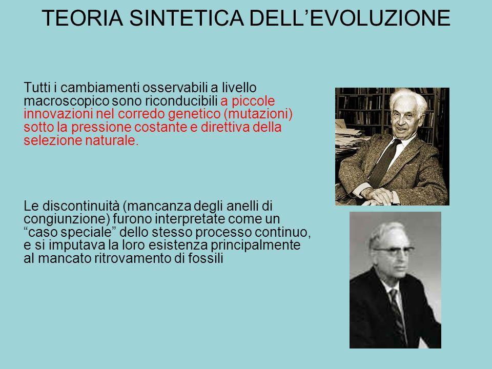 TEORIA SINTETICA DELL'EVOLUZIONE