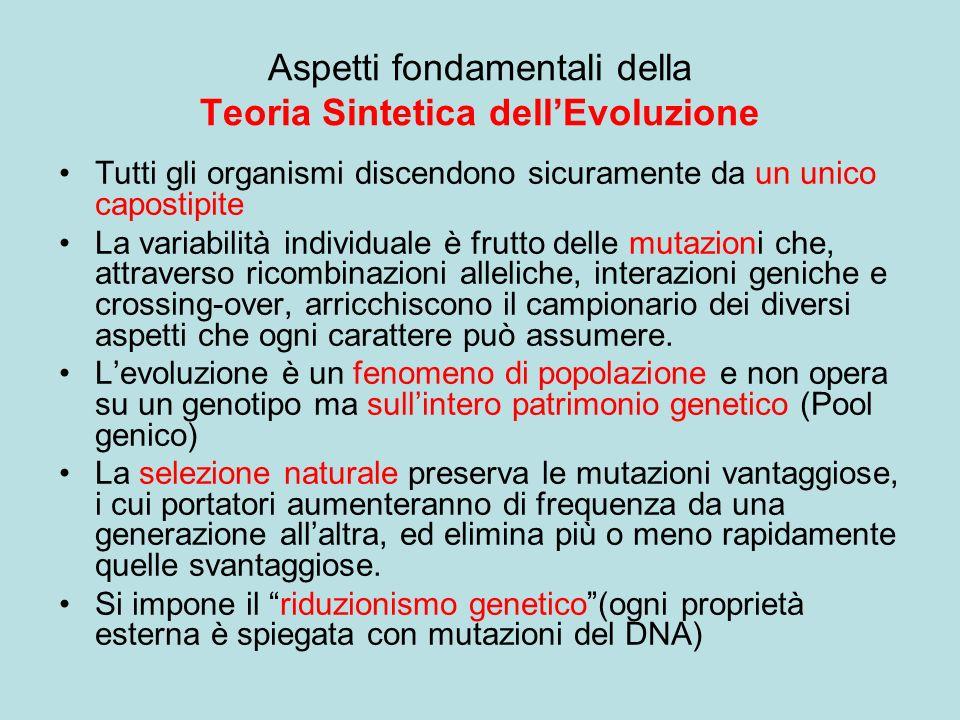 Aspetti fondamentali della Teoria Sintetica dell'Evoluzione