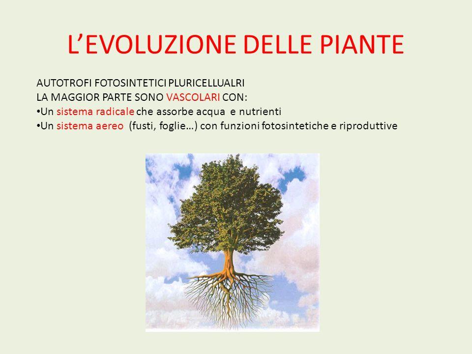 L'EVOLUZIONE DELLE PIANTE