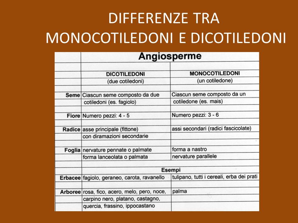 DIFFERENZE TRA MONOCOTILEDONI E DICOTILEDONI