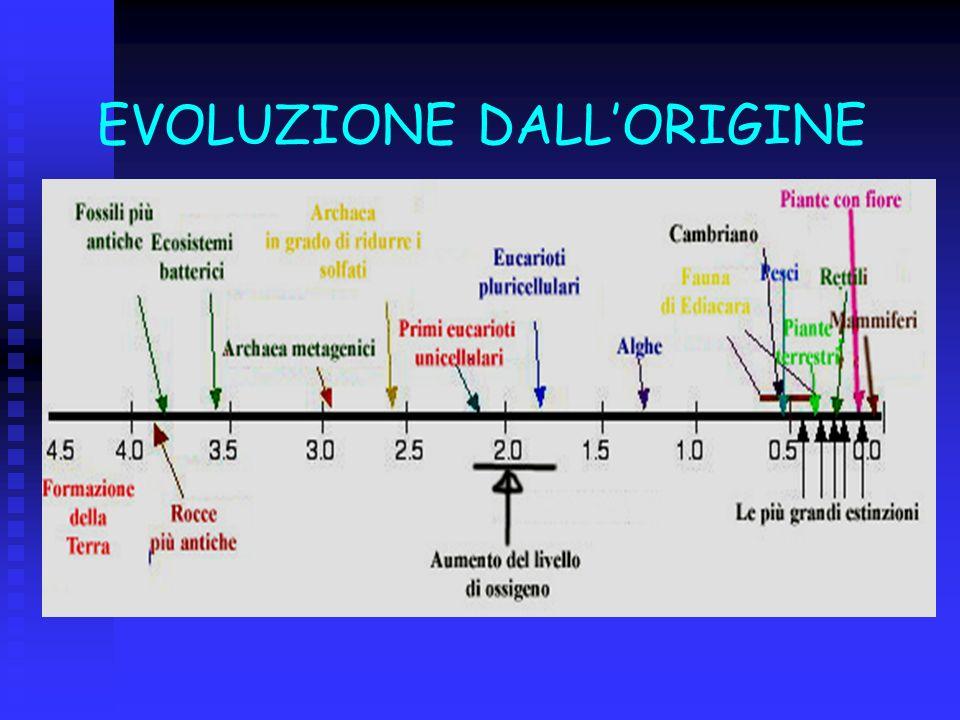EVOLUZIONE DALL'ORIGINE