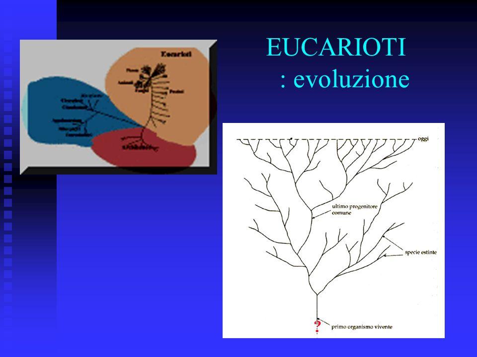 EUCARIOTI : evoluzione