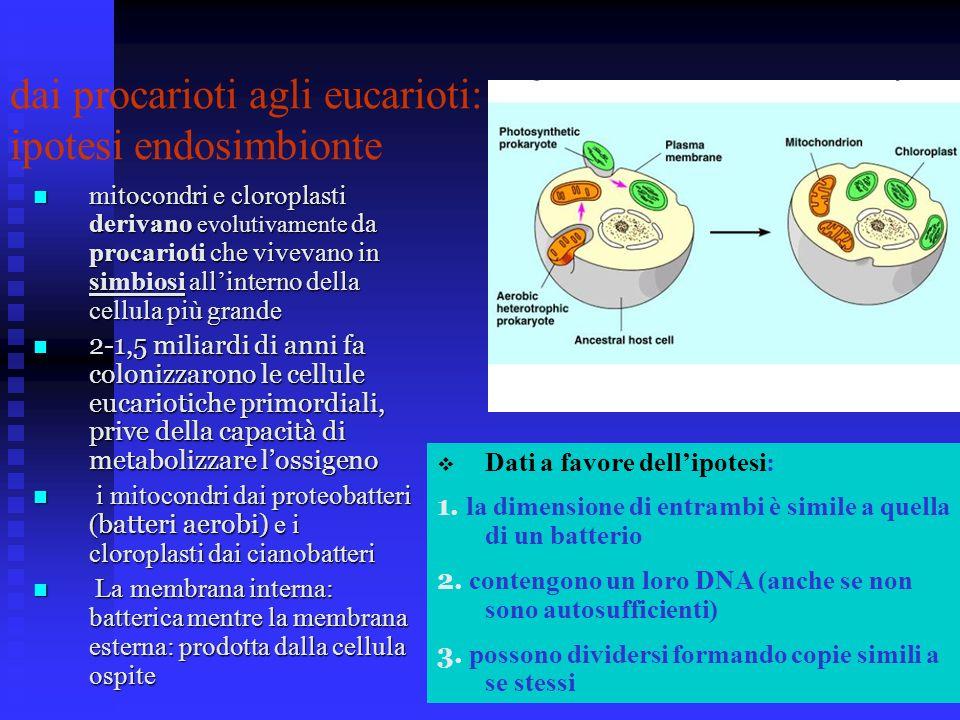 dai procarioti agli eucarioti: ipotesi endosimbionte